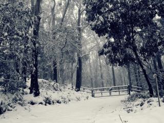 обои Ворота закрыты в зимний парк фото