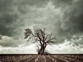 обои Дерево на убранном поле в пасмурную погоду фото