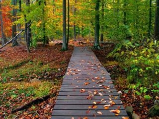 обои для рабочего стола: Деревянная тропа ведущая к осенниму лесу
