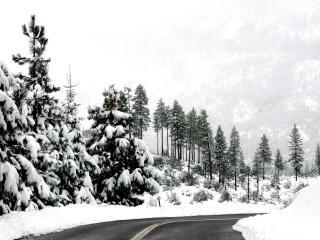 обои Насаждения у дороги зимней фото