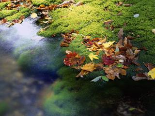 обои для рабочего стола: Опавшая листва у водоема