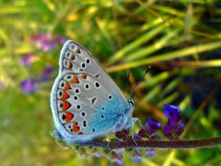 обои На цветочке красивая бабочка фото