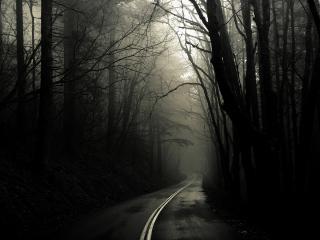 обои Дорога в мрачном лесу фото