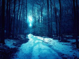 обои Пороша на лесной дороге фото
