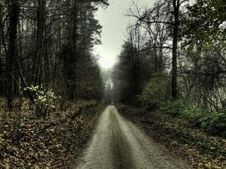 обои Серая осенняя дорога в лесу фото