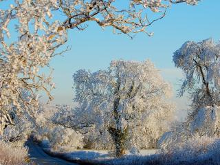 обои Сказка зимняя у дороги фото