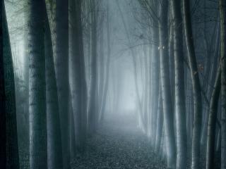 обои Туманная тропинка в лесу фото
