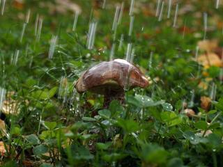 обои Гриб под дождём фото