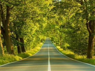 обои Аккуратная дорога через зеленый лес фото