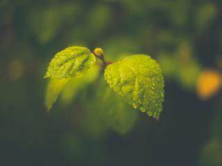 обои Мокрые листики в туманную погоду фото