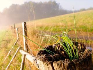 обои Проросшая трава в сгнившем столбе фото