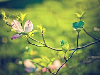 обои Весенняя веточка с цветком фото