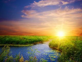 обои Летний пруд у высокой травы, на закате фото