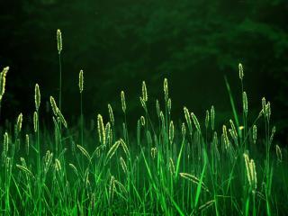 обои Яркая зелень травы фото