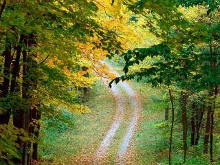 обои Осення листва на лесной дороге фото
