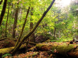 обои Пейзаж старого леса фото