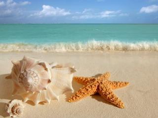 обои Подводные обитатели на песке фото