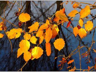 обои Осенний контраст фото