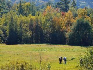 обои Лес,   поляна,   кони фото