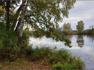 обои Осень у пруда фото