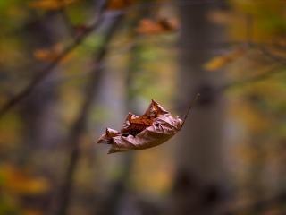 обои Падают,   падают листья фото
