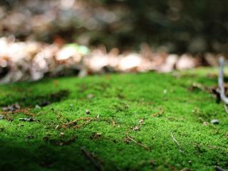 обои Зеленая трава на размытом фоне фото