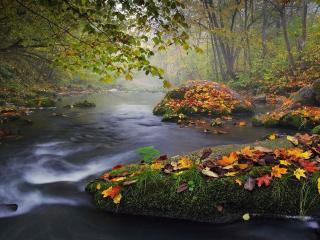 обои Сентябрь в лесу у ручья фото