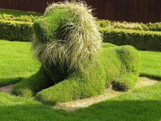 обои Фигура из травы - Собака фото