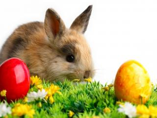 обои Крашанки и кролик на цветущей траве фото