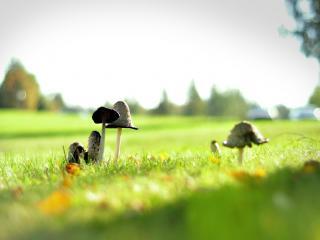 обои В травке зеленой грибы фото