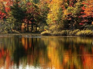 обои Краски осени отражаются в пруду фото