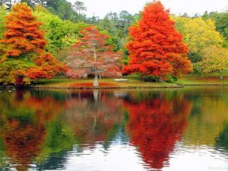 обои Красно-жёлтая осень фото