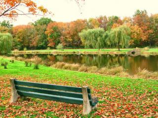 обои Осенний день фото