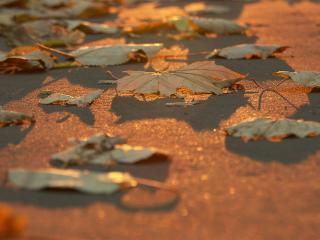 обои Листья на асфальте в лучах солнца фото
