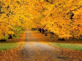 обои Дорога в золотую осень фото