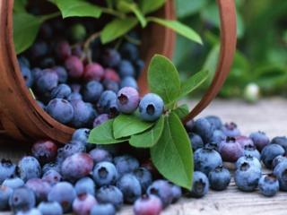 обои Лукошко с тёмно-синеми ягодами фото