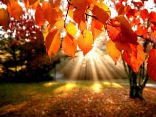 обои Осенняя веточка фото
