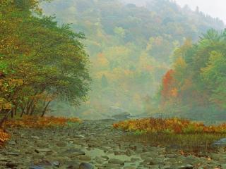 обои Тихий утренний туман фото