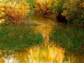 обои Заросший осенний пруд фото