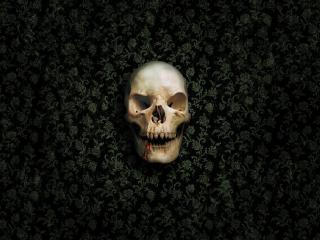 обои Злой череп на обоях фото