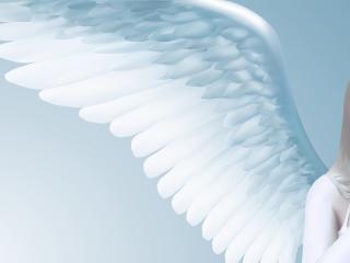 обои Крыло девушки ангела фото