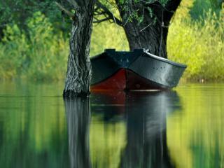 обои Лодка привязанная к деревьям, на летнем пруду фото