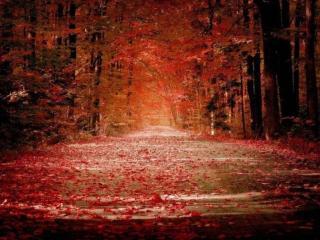 обои Дорога цвета в осень фото
