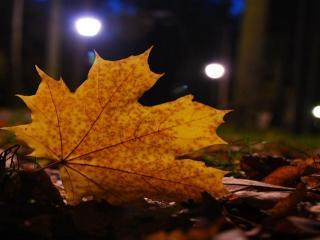 обои Кленовый лист в свете фонарей фото