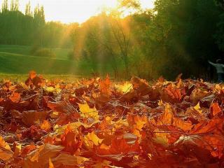обои Осенние листья на земле фото
