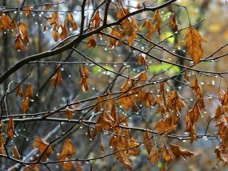 обои Осенний дождь фото