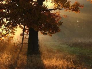 обои Осенний дуб фото