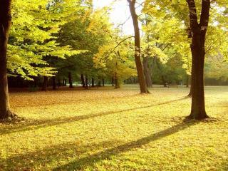 обои Салатовая осень фото