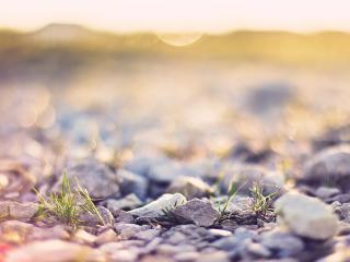 обои Зеленая травка сквозь камешки на розмытом фоне фото