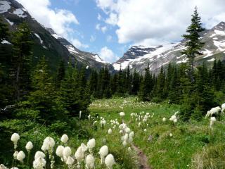 обои Цветут травы на опушке в ущелье гор фото